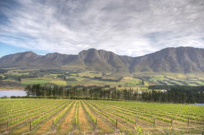 Top SA Wines