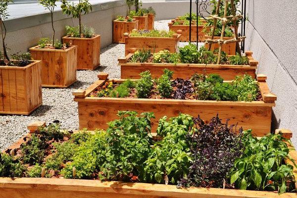 Chef Garden: Maslow's Chef Starts A Roof Top Herb Garden